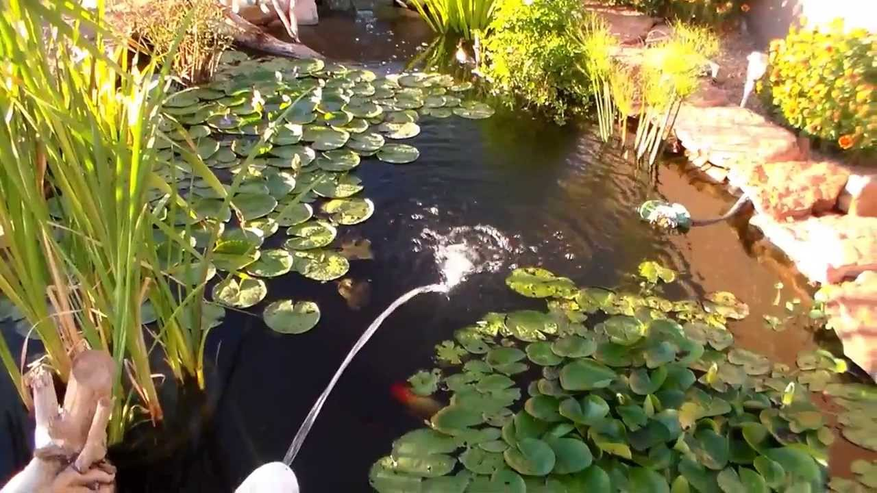backyard fishing pond part 18 beautiful backyard fish pond