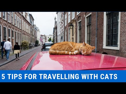 How To Travel With Your Cat In A Car?