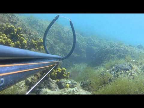 Podvodni ribolov - Kavali