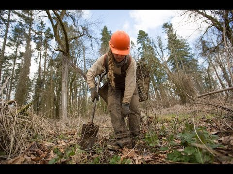 Planting Trees: One Simple Act for Nature & Sustainability