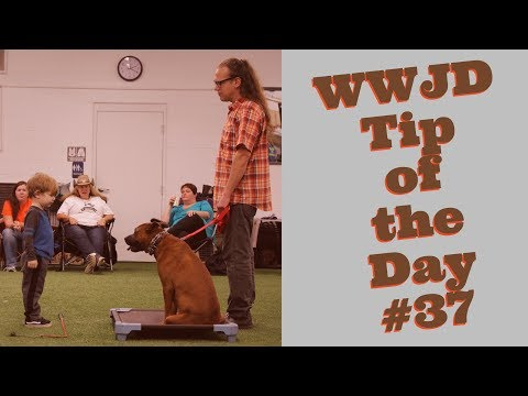 What Would Jeff Do? Dog Training Tip of the Day #37 Empathy