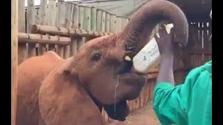 Orphaned Baby Elephants Bedtime Routine | The Dodo LIVE
