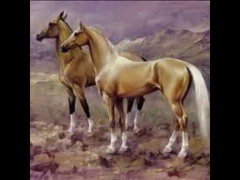 Türkmen Atlarıahal Teke Youtube