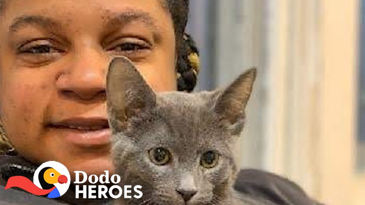 This Woman Has Saved Hundreds Of Thousands Of Cats | The Dodo Heroes