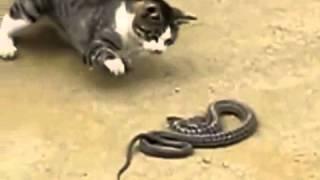 =^_^= кошка съела змею... Рикки-Тикки-Тави был кот!!!