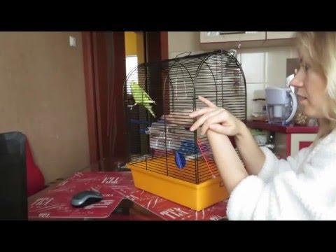 Вопрос: Как приучить попугайчика садиться на руку?