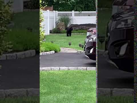 Police Increase Patrols Near School Following Bear Sighting In Ossining