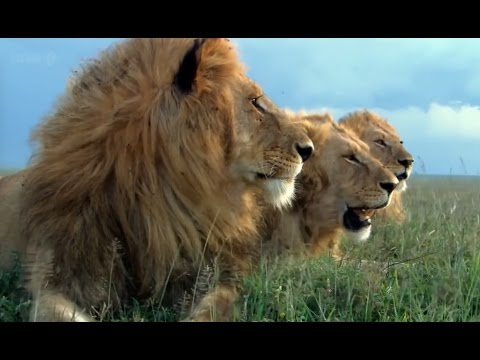 HD Spy Cam - Animals Documentary - AFRICA INTENSE
