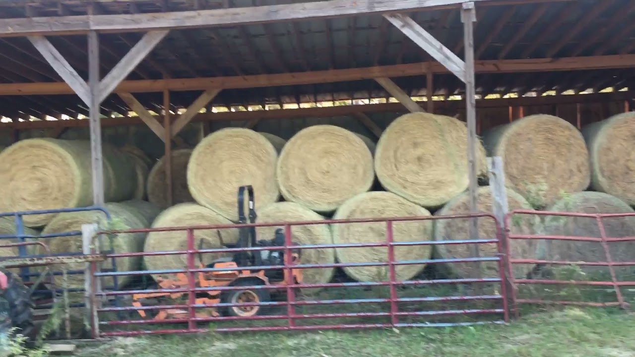 Download Hay in the barn cows and goats are good for another year