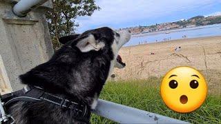 Reacción de mi perro al ver el mar y la playa por primera vez en su vida