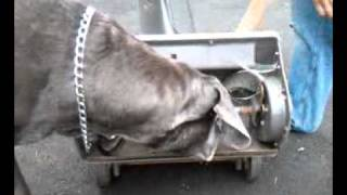 Diablo the Great Dane and the snowblower