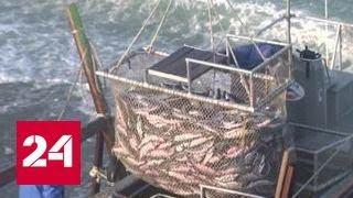 Рыбопромышленники Сахалина взяли под защиту 20 рек