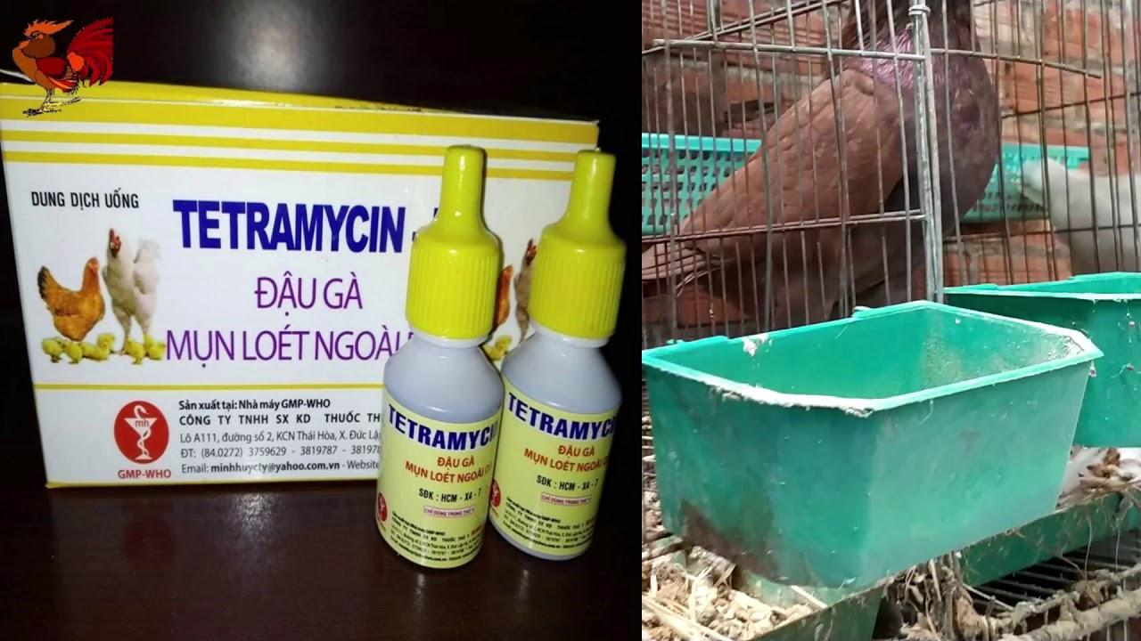 Điều trị bệnh đậu trên chim bồ câu