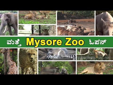 Mysore Zoo Is  Open For Public  | OneIndia kannada