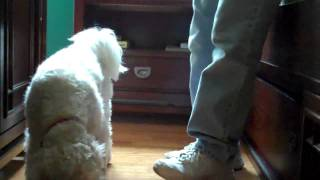 Puppy Obedience Commands - Leave It