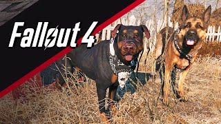 Fallout 4: How to get Junkyard Dog (+5 settlement defense)