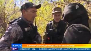 видео: В Приморье проходят рейды против браконьеров