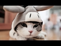 Strange cats - Funny cat Compilation 2017