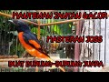 Burung Mantenan Gacor Volume  Mp3 - Mp4 Download
