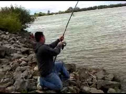 rio vista sturgeon fishing 1 OF 1