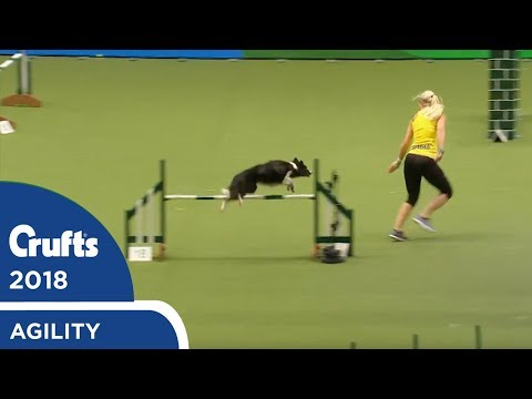 Crufts - International Invitation - Large Jumping Part 1 | Crufts 2018