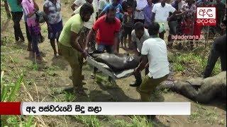 Three elephants killed by train in Habarana