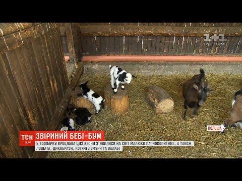 ТСН: Зоопарк Вроцлава похвалився своїми найменшими мешканцями, що народилися цієї весни