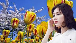 Khúc Hát Thanh Xuân (One Day When We Were Young) Ca sĩ:Thanh Lan & Ngọc Hạ - Video 4K: Trần Ngọc