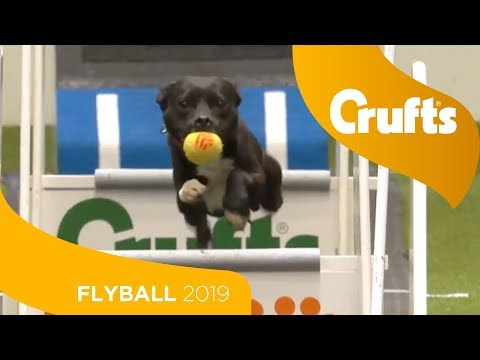 Flyball - Team Semi-Finals - Part 1 | Crufts 2019