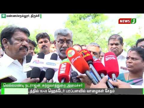 திருச்சி மாவட்டத்தில் 1648 ஹெக்டேர் பரப்பளவில் வாழைகள் சேதம் || Tiruchi