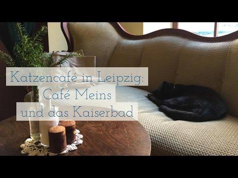 Katzencafé in Leipzig: