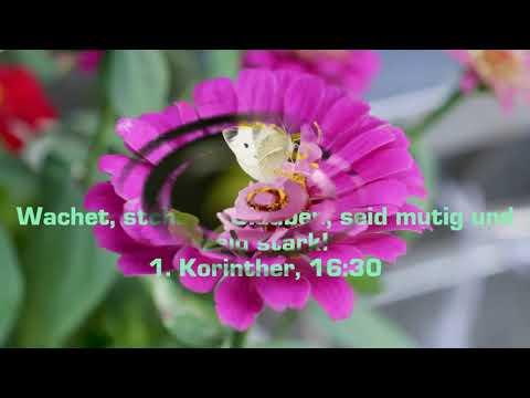 Guten Morgen Wunsch Christlich Biblische Ferse Youtube