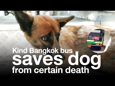 Kind Bangkok bus driver saves dog from certain death | The Nation Thailand