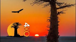 Baixar 4xOverland 4WD Global Adventure Channel Promo 2019