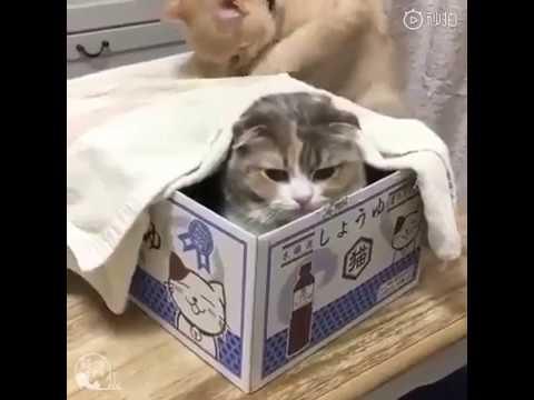 Cat Cutest moments complication #1
