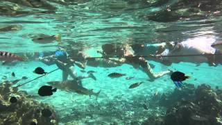 Lagoonarium tour Moorea 08 June 2015