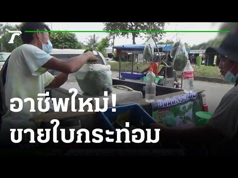 อาชีพใหม่! เปิดท้ายขายใบกระท่อม หลังรัฐบาลปลดล็อกจากบัญชียาเสพติด | 06-09-64 | ข่าวเที่ยงไทยรัฐ