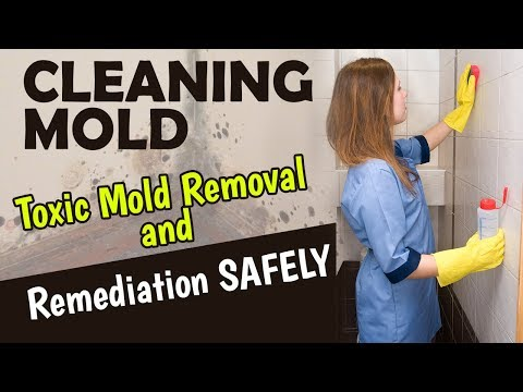 Cleaning Mold: Toxic Mold Removal and Remediation SAFELY