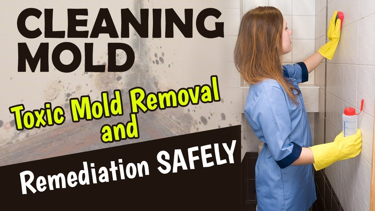 Cleaning Mold Toxic Removal And Remediation Safely
