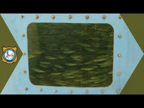 Fish Hatchery Water Treatment