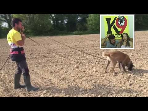 Joe Sandouk - FMBB World Championship Competitor comments on the Precision Tracking Dog System