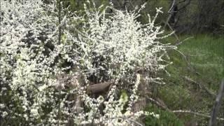 Природа Весна