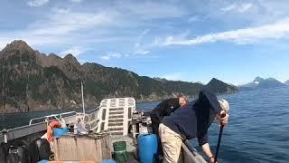 Silver Salmon Fishing, Seward