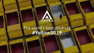 The world's best photo of #Yellow2019: Charlie B.