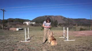 Dog Training - Voice Control