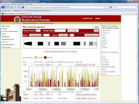 FSU - Biology - Replication Domain - General Navigation