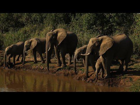 Botswana Has Lifted Its Ban On Elephant Hunting