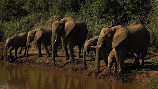 Botswana has lifted its ban on elephant hunting