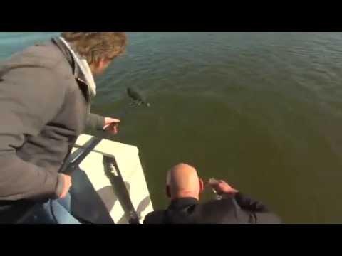TV reporter fell into the sea