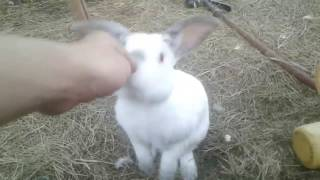 Friendly Rabbit Comes When Called!! |Ruby's Zoo